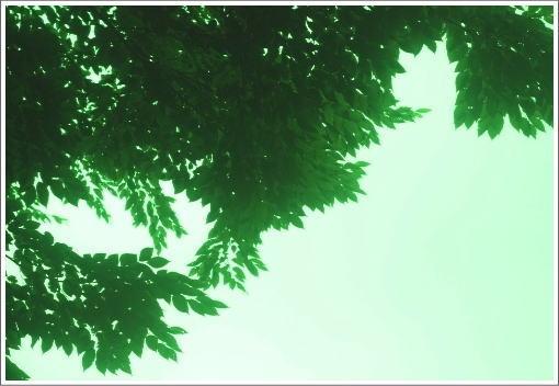 グリーンの葉っぱ.jpg